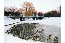 Ducks-on-BPG-winter-24x-30