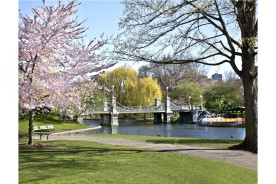Spring-Haffenreffer-Boston-